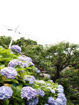 yokosukashi-jishinsai-uragou-s.jpg