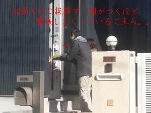 hayama-nagae-t-ohikiwatashi.jpg