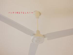hayama-isshiki-k-ohikiwatashi4.jpg