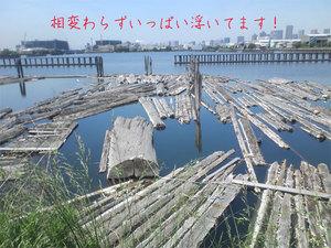 shinkiba-mukuita-blackwalnut-gekiyasu12.jpg