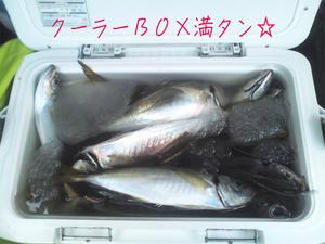 hashirimizu-aji-nakao-aji-donburi.jpg