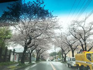 sakura-yori-kuike.jpg