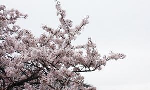 yokosukashi-maboridai-danchi-k-ohikiwatashi.jpg